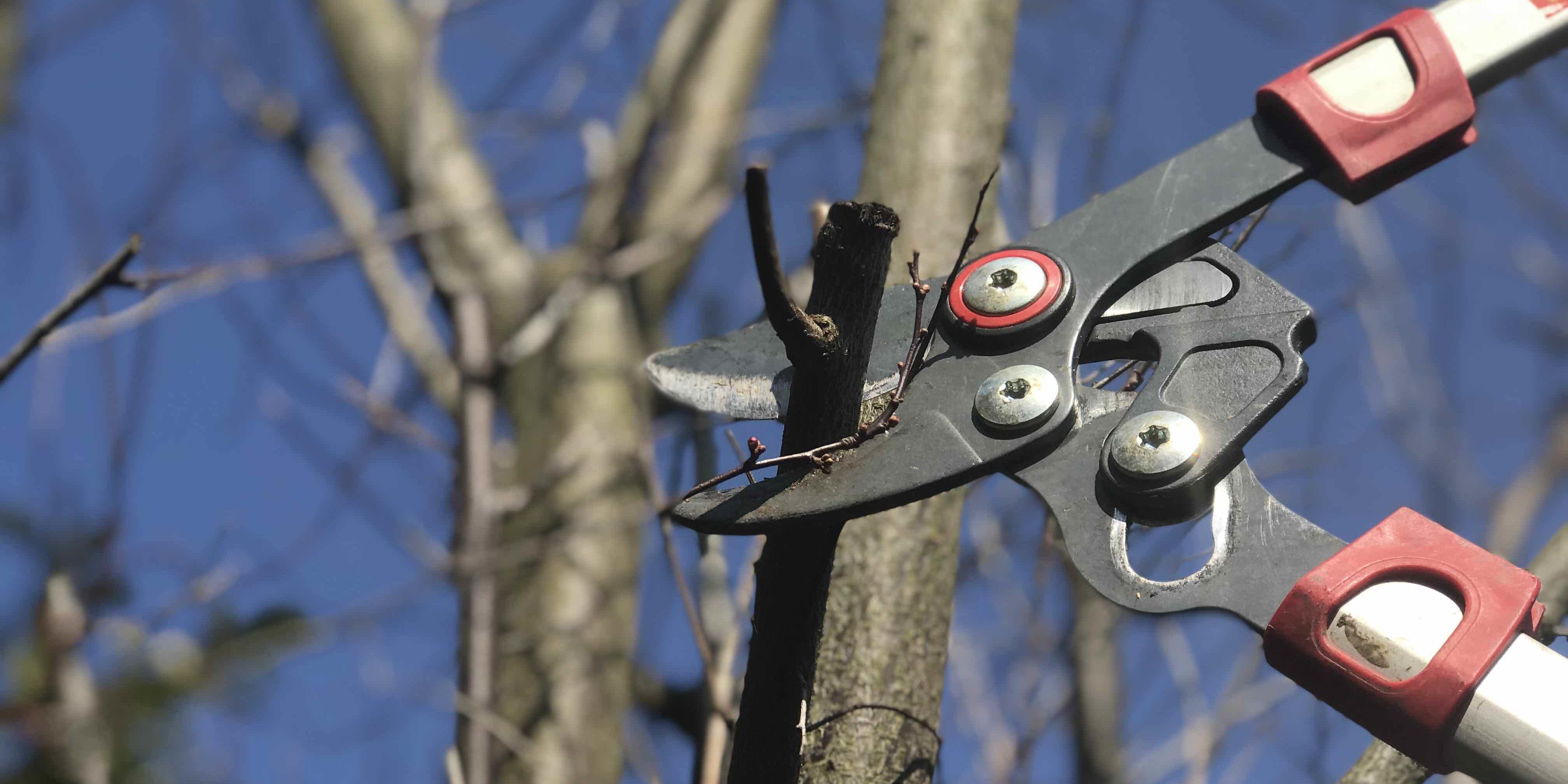 Baumpflege Fürth